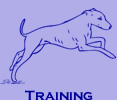 Go Dog Go 3 Week Board and Train - Dog Training